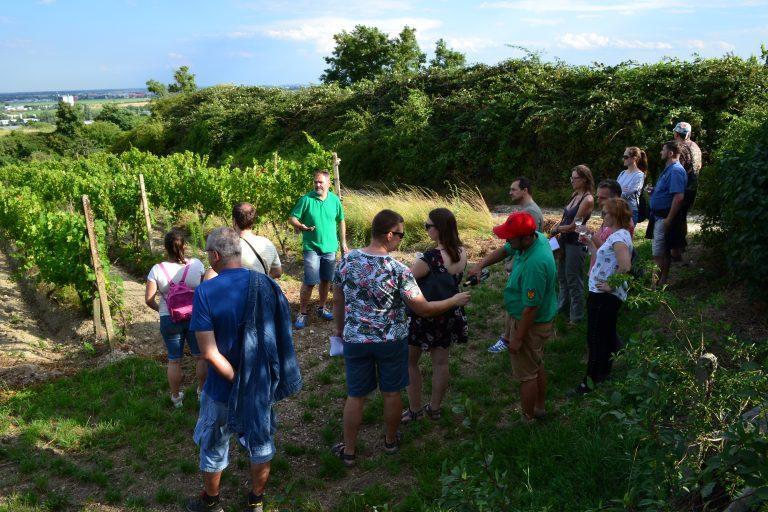 4.prírodovedná vychádzka po vinohradoch